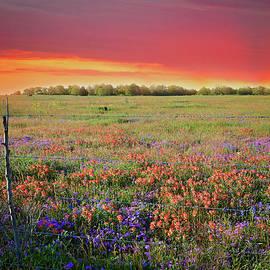 Lynn Bauer - Wild About Texas Sunsets