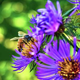 Steve Harrington - Wild Aster And Honey Bee - Paint