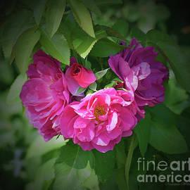 Malanda Warner - Wild Country Roses