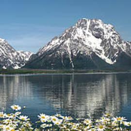 Wildlife Fine Art - Wild Daisies in the Tetons
