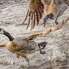 Wes Iversen - Wild Goose Chase