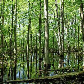 Debbie Oppermann - Wild Goose Woods Pond I