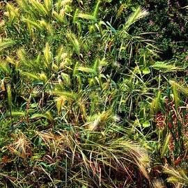 RC deWinter - Wild Grass Garden
