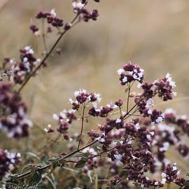 Wild Herbs  #herbs