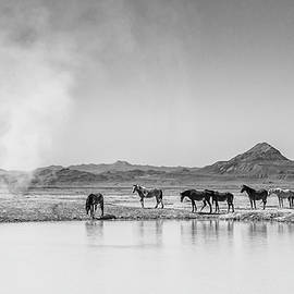 Wild Horse Dust Devil by Darlene Smith