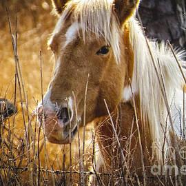 Dawn Gari - Wild Horse of Chincoteague