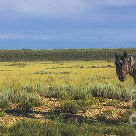 Priscilla Burgers - Wild Horse of Pilot Butte