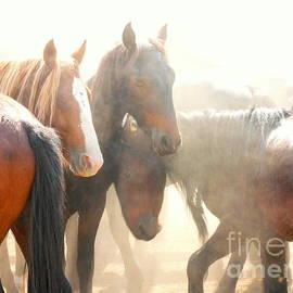 Lexa Harpell - Wild Horses - Australian Brumbies 2