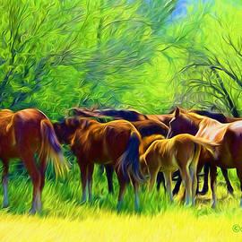 Barbara Zahno - Wild Horses Looking for Shade
