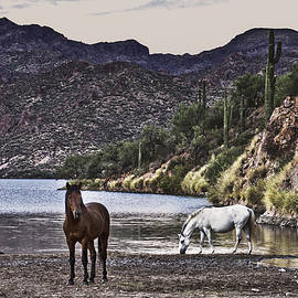 Wild Horses of salt River by Janet Ballard