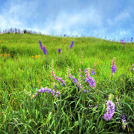 Lynn Bauer - Wild Lupine Bush in the Santa Monica Mountains