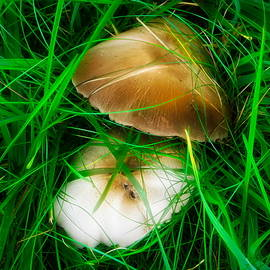 Wild Mushrooms by Arlane Crump