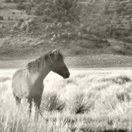 Wild Mustang Of Adobe Valley Eastern Sierra by Kim Hawkins Eastern Sierra Gallery