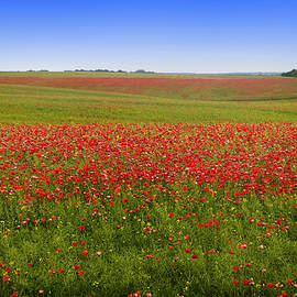Wild Poppy Field, Ukraine  by Yuri Lev