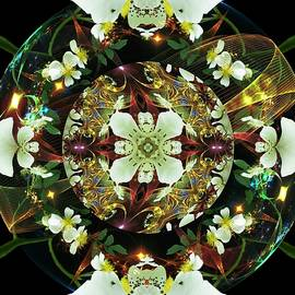 Nancy Pauling - Wild Rose Fractal 4