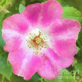 Mona Stut - Wild Rose