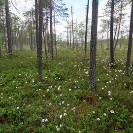 Jouko Lehto - Wild Rosemary morass