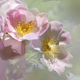 Elaine Manley - Wild Roses