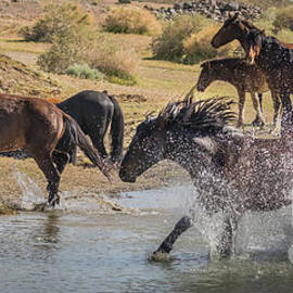 Webb Canepa - Wild Stallion Showing Off