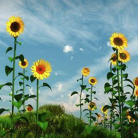 Tim Fillingim - Wild Sunflower Patch...
