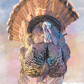 Patti Deters - Wild Tom Turkey
