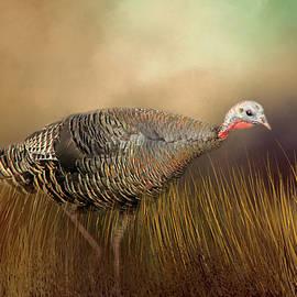 Donna Kennedy - Wild Turkey Hen