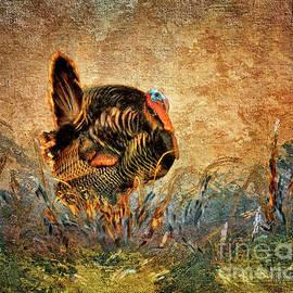 Lois Bryan - Wild Turkey