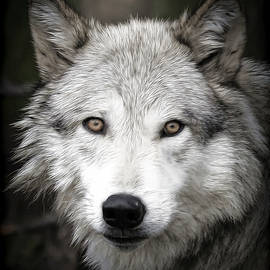 Athena Mckinzie - Wild Wolf
