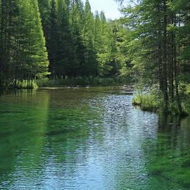 Wilderness Stream by Ann Horn