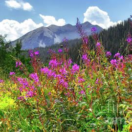Susan Warren - Wildflower Capital