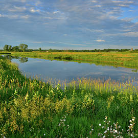 Ray Mathis - Wildflower Garden Along the Nippersink Creek in Glacial Park