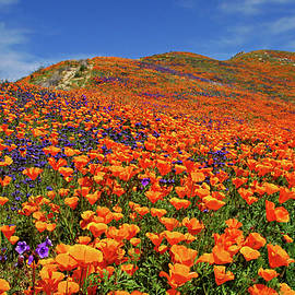 Wildflower Jackpot by Lynn Bauer