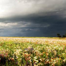 Eric Benjamin - Wildflower Panorama 2008