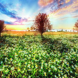 Debra and Dave Vanderlaan - Wildflower Sunset