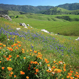 Lynn Bauer - Wildflowers Along Bear Mountain Road