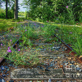 Wildflowers Along The Tracks by Mark Miller