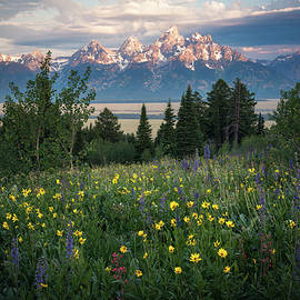 Wildflowers at Grand Teton National Park - James Udall
