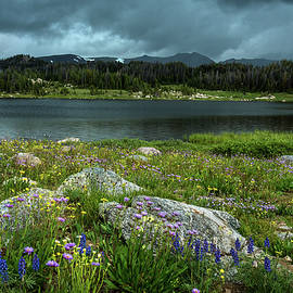 Wildflowers By The Lake by Rick Strobaugh