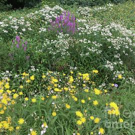 Wildflowers in a Roadside Ditch by Conni Schaftenaar