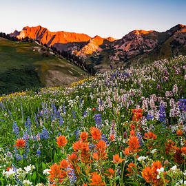 Johnny Adolphson - Wildflowers in Albion Basin.