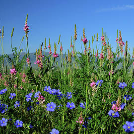Michael Morse - Wildflowers Of Idaho