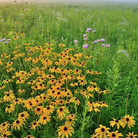 Ray Mathis - Wildflowers of West Glacial Park at Sunrise