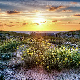 Debra and Dave Vanderlaan - Wildflowers on the Sand Dunes