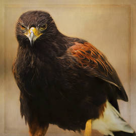 Jordan Blackstone - Wildlife Art - Patience and Perseverance
