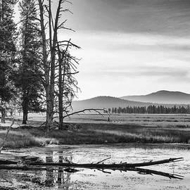 Williamson River Wonder ... by Judy Foote-Belleci