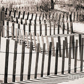 Colleen Kammerer - Winding Beach Fences in Sepia