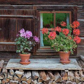 Yair Karelic - Window and Geraniums