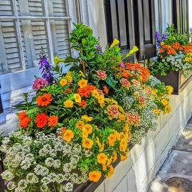 Window Box in May by Susan Bryant