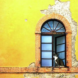 Window on Colorful Wall in Siena Italy - Susan Schmitz