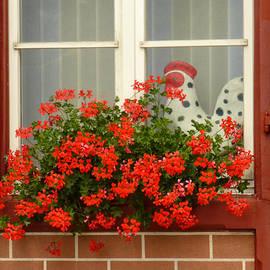Connie Handscomb - Window Watcher